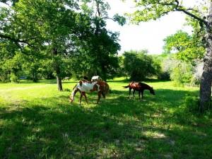 Farmhorses